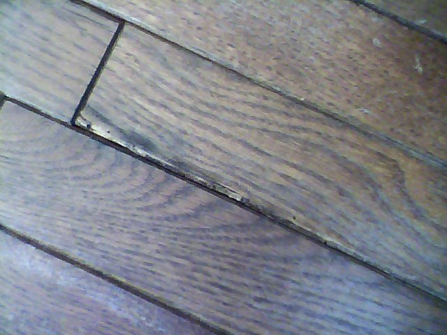 Infested hardwood flooring how to prevent re infestation for Hardwood floors cupping